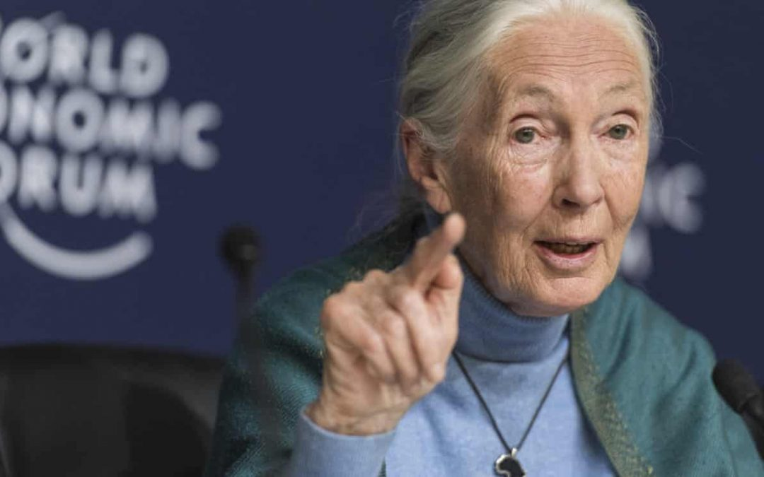 Jane Goodall: humanity is finished if it fails to adapt after Covid-19